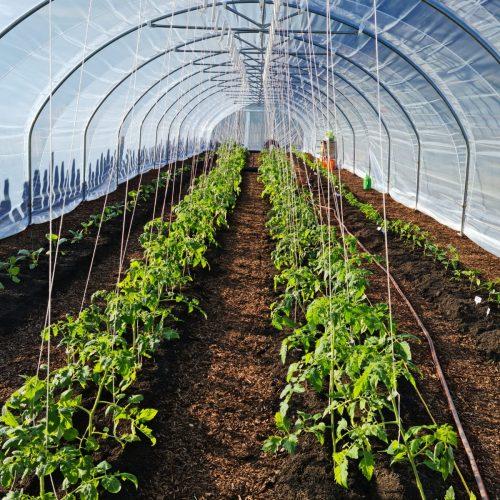 Greenhouse innenansicht
