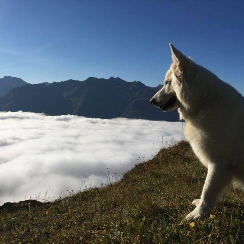 Sam über den Wolken an der Leutkircher Hütte
